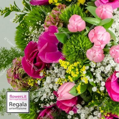 ALLEGRIA -  Tulipani,...