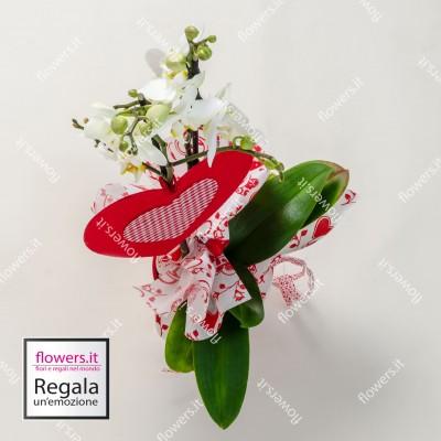 BELLEZZA -  Orchidee...